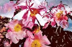 "Résultat de recherche d'images pour ""PETER FISCHLI DAVID WEISS FLOWERS & MUSHROOMS"""