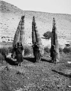 American Colony Photo Department, the Matson Photo Service, Bedouins 1898, Jerusalem, Palestine, Egypt