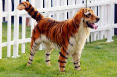 painted animals | trend from China were people paint their dogs to look like animals ...