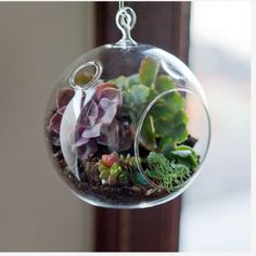 plantes suspendues, bulles de plantes, plantes grasses suspendues,