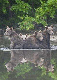 Bear cubs hanging out Reptiles, Mammals, Animals And Pets, Baby Animals, Cute Animals, Bear Pictures, Animal Pictures, Beautiful Creatures, Animals Beautiful