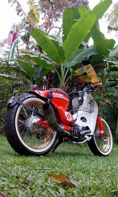 StreetCub with the custom fat tire & exhaust Motorcycle Design, Motorcycle Bike, Bike Design, Honda Motorcycles, Vintage Motorcycles, Cars And Motorcycles, Honda Motorbikes, Honda Cub, Scooters
