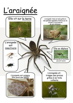 l'araignee Preschool Science, Life Science, Science And Nature, How To Speak French, Learn French, Alternative Education, Summer Science, Core French, French Classroom