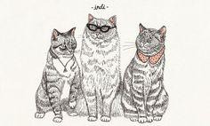 Indie Maverick illustration   Animal Illustrations by Indi Maverick