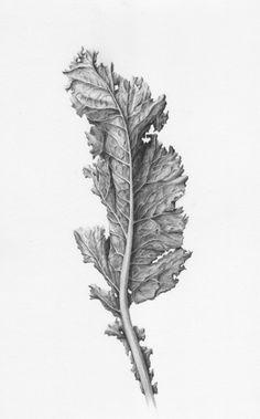 SHADES OF GRAY | Botanical Drawings in Graphite by Eva-Maria Ruhl