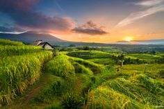 Photo Sunrise over Jatiluwih Rice fields by Foo Weng on 500px