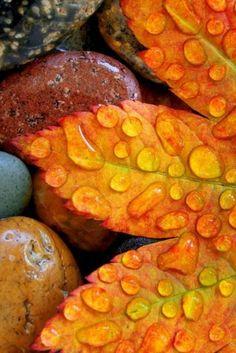 autumn leaves after rain