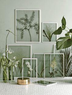 Encadrer des plantes sèchées telles que fougères, feuilles de palmier etc.. / Framed Botanicals Found botanicals are pressed and framed for a beautiful display. A great way to preserve summer.wa