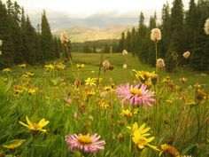 Take a hike or site-seeing adventure during your summer stay in Vail and Beaver Creek.
