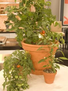 Growing vegetables in a pot or in the garden.