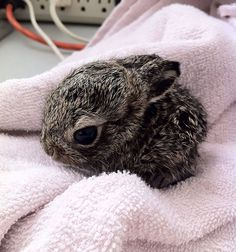 Baby bunnies is a nice way to start the day, or end it for that matter - Imgur Tiny Bunny, Super Cute, Your Heart, Bunnies, 21st, Rabbit, Cute Pets, Rabbits, Bunny Rabbit
