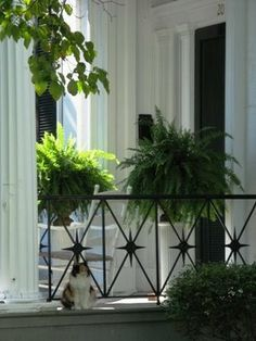 fantastic iron porch detail...this plants are such a wonderful sight to behold in  an iron porch designed as this.