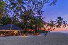 Natures Paradise  #aaaVeee #maldives #travel #beach #colors #sunset #nature #beautiful #wow by maldives : #mal https://t.co/qzAebLaM51 (via Twitter http://twitter.com/maldivesinpics/status/731718421688266752) - http://ift.tt/1HQJd81