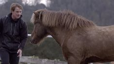 What happens when a professional trainer gives up the tools of control and treats the horse like a bold, creative partner?    (for more, visit us at Intrinzen.horse)    [music licensed from Premiumbeat.com]  [video by seriouspony]
