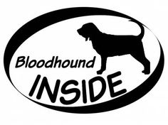 Hund Inside Auto AufkleberInside Aufkleber: Bloodhound