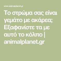 Το στρώμα σας είναι γεμάτο με ακάρεα; Εξαφανίστε τα με αυτό το κόλπο | animalplanet.gr