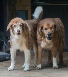 Roscoe & Captain Ron