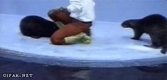 Otters work together! http://38.media.tumblr.com/128a77f3aa473e21920075d1c317a8af/tumblr_n7iwpehhZg1s2yegdo1_400.gif