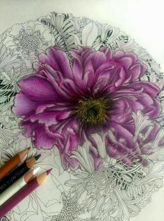 Creative Haven In Full Bloom Colored Pencil Artwork, Color Pencil Art, Coloured Pencils, Coloring Book Art, Coloring Tips, Adult Coloring Pages, Colored Pencil Tutorial, Colored Pencil Techniques, Pencil Drawing Tutorials