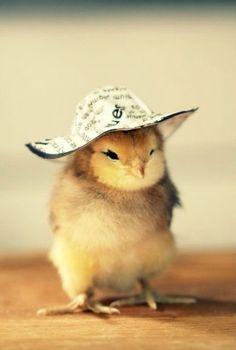 cute chick-a-dee ..
