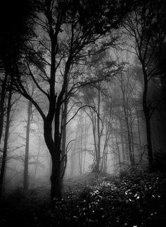 .Dark forest
