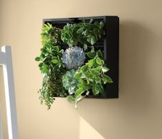 Green Wall: When we finally buy our home, we will definitely have living wall art!