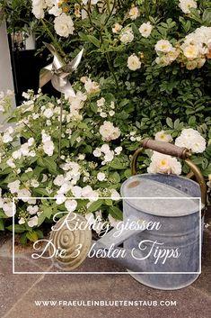 FIT FÜR EINEN TROCKENEN UND HEISSEN SOMMERTAG - MIT DIESEN 3 TIPPS KANNST DU DEINE PFLANZEN OPTIMAL BEWÄSSERN UND VOR KRANKHEITEN SCHÜTZEN. www.fraeuleinbluetenstaub.com #garten #blumen #pflanzen #gärtnern #gartengestaltung Wreaths, Fit, Decor, Medical Conditions, Planting Flowers, Tips, Decoration, Door Wreaths, Shape