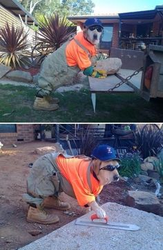 Bahaha home improvement dog is funny!