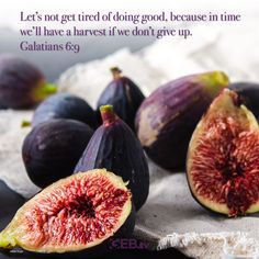 Keep going. Keep trying. Do good and God will provide. #Harvest #Abundance #InspirationalQuotes #LiveWell Fresco, God Will Provide, Agriculture, Eggplant, Harvest, Vegetables, Bible Scriptures, Abundance, Recipes