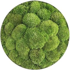 Stylegreen Ronde verticale tuin Pole moss - Ellipsoid Small