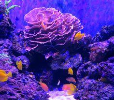 Niagara Aquarium