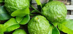 Óleo essencial de bergamota – poderoso contra estresse e ansiedade