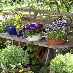 Idei pentru tine si casa ta Archives - Page 2 of 15 - Blog   Homelux   Idei pentru confort Plants, Blog, Blogging, Plant, Planets