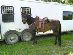 For Safety's Sake, Learn How to Read the Tires on Your Horse Trailer