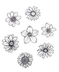 25 Beautiful Flower Drawing Information & Ideas - Brighter Craft - 25 Beautiful . - 25 Beautiful Flower Drawing Information & Ideas – Brighter Craft – 25 Beautiful Flower Drawing - Easy Flower Drawings, Beautiful Flower Drawings, Pencil Drawings Of Flowers, Flower Sketches, Art Drawings Sketches, Beautiful Flowers, Drawing Flowers, Flowers To Draw, Cute Flower Drawing