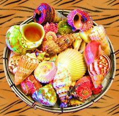 painted seashells. cute!!
