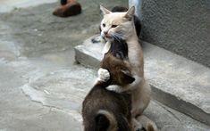 猫と犬の仲良し画像 06|ねこLatte+