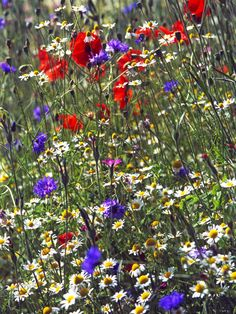 Meadow Plantings in an Open and Sunny Spot