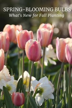 Fall is officially here and if you haven't already ordered your spring-blooming bulbs, now is the time! Read on to learn about some of this year's new varieties, mixes and bulk buys.
