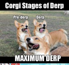 Corgi Derp!  Derpy (in corgi world) is a word used to describe an overzealous corgi that incidentally looks completely, utterly, ridiculous. while at the same time being inexplicably adorable. It typically involves your corgi making some half-baked face, with googly eyes and his tongue hanging out the side. Crossed eyed corgi face is teh true derp.