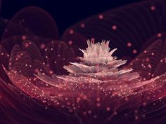 # Abstract Flower Petals Wallpaper Rose, Full Hd Wallpaper, 1080p Wallpaper, Original Wallpaper, Iphone Wallpaper, Hd Wallpapers 1080p, Flower Backgrounds, Wallpaper Backgrounds, Pink Sparkles