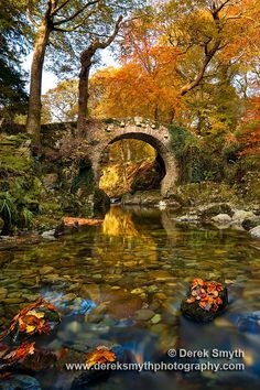 Falling Autumn leaves land on outcrops of rocks in the Shimna River to form little leaf islands downstream from Foley's Bridge in Tollymore Forest park. by Derek Smyth on 500px