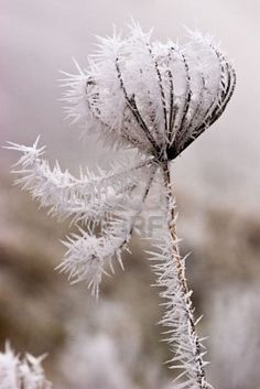 Hoar frost beauty