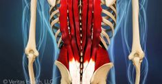 Our animated video on lower back strains can help you better understand the causes, symptoms, and treatment options for this common injury.