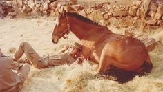 Now horsie -tell me you name - and none of that horse with no name nonsens