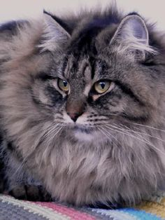 This looks like my cat Winston