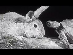 """▶ Aesop's The Tortoise and the Hare: """"The Hare and the Tortoise"""" 1947 Encyclopaedia Britannica Films - YouTube"""