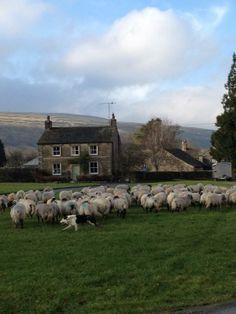 Ont'Green #Arncliffe @yorkshire_dales ... from @ hilltopfarmgirl