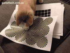Optical illusions work on cats too!