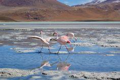 Lagunas - por Rodolfo Pinelli
